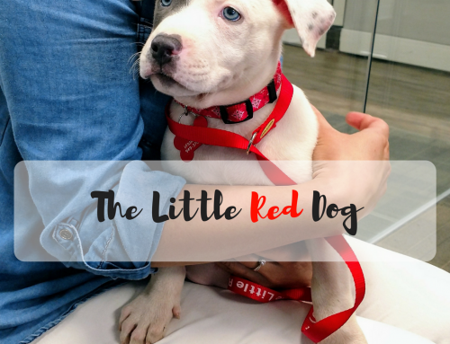 The Little Red Dog – Charity Spotlight